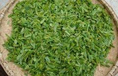 六安瓜片是什么茶叶图片